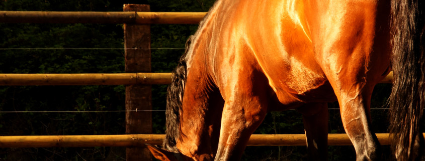 european-stallions-resort-(1)