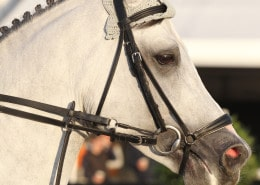 23/09/2010 ; Lanaken ; Wolrd Breeding Championships - Lanaken Belgium ; 7011 - Ariana Azcarraga - Jumex Sport Cornet's Stern ; Sportfot