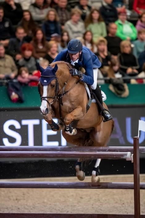 French stud stallion
